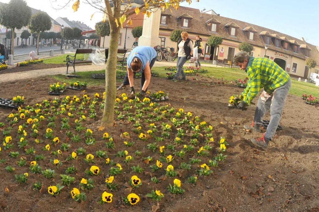 Tizenegyezer árvácska és hatezer tulipán az ágyásokba